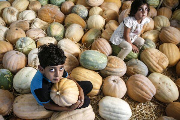 Bambini palestinesi tra le zucche in un capannone a Beit Lahia, nella Striscia di Gaza - Sputnik Italia