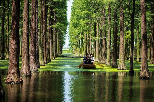 Turismo rilassante: navigazione tra gli alberi del lago Luyanghu nello Yangzhou, in Cina - Sputnik Italia