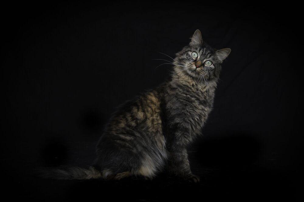 Camene, la gatta europea, posa per una foto nel rifugio.
