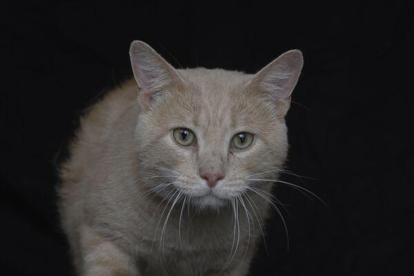 Anche il gatto Fibo ha 6 anni ed è in cerca di una casa. - Sputnik Italia