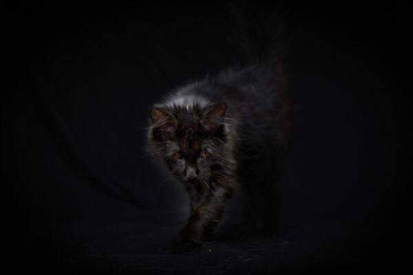 Il gattino cieco di 5 mesi Nuachea è finito sulla strada. - Sputnik Italia