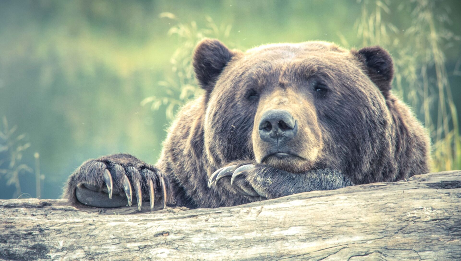 L'orso bruno - Sputnik Italia, 1920, 06.05.2021