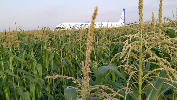 L'atterraggio d'emergenza di un aereo passeggeri A321 vicino a Mosca - Sputnik Italia