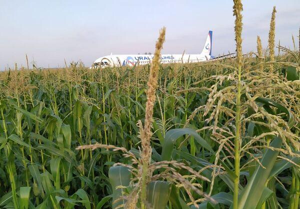 L'aereo della compagnia Ural Airlines doveva condurre il volo Mosca – Sinferopoli. - Sputnik Italia