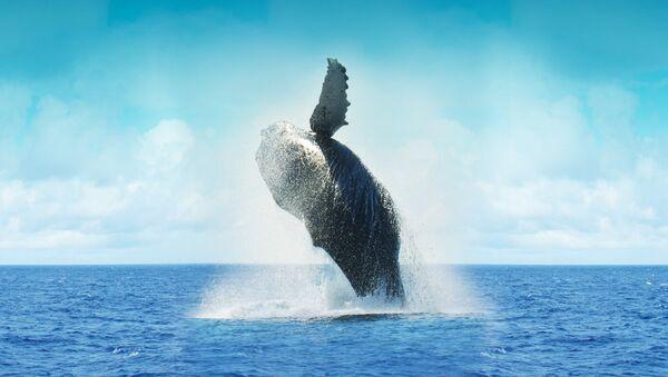 Balena - Sputnik Italia