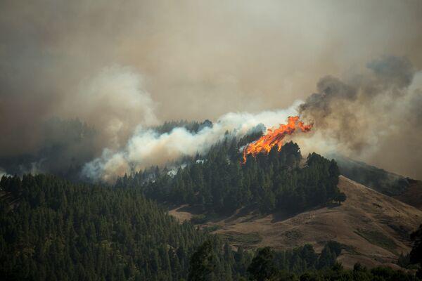 Vasto incendio boschivo all'isola di Gran Canaria visto dall'alto. - Sputnik Italia