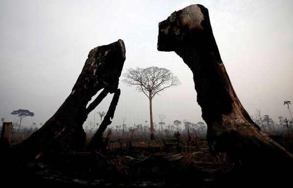 Il presidente francese Emmanuel Macron ha definito gli incendi boschivi in Brasile una crisi internazionale.  - Sputnik Italia