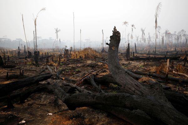 Numerosi leader europei hanno accusato degli incendi il presidente brasiliano Jair Bolsonaro e il suo governo. - Sputnik Italia