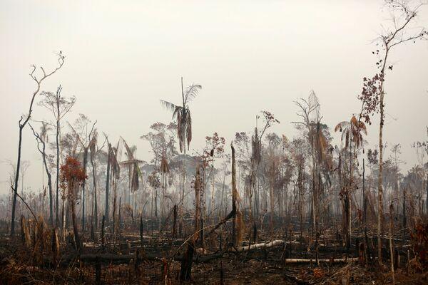 In particolare, gli ambientalisti di Greenpeace associano l'aumento del numero di incendi alla politica di Jair Bolsanaro e alla deforestazione col fine liberare l'area per lo sviluppo delle imprese minerarie o di terra coltivabile per le aziende agricole.  - Sputnik Italia