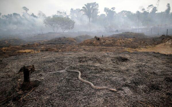 Sostengono che il leader brasiliano abbia descritto la protezione delle foreste tropicali come un ostacolo allo sviluppo economico. - Sputnik Italia