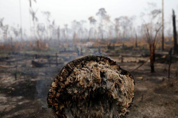 In base al quale, nel corso dell'anno, il tasso di distruzione della foresta amazzonica è aumentato dell'88%. - Sputnik Italia