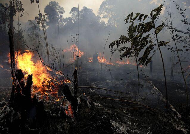 Incendi in Amazzonia