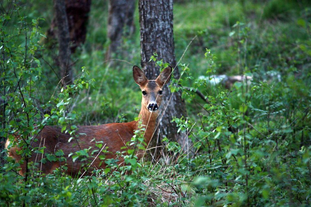 Al secondo posto Svezia. Come in Finlandia, il 68% del territorio del paese è coperto da boschi.