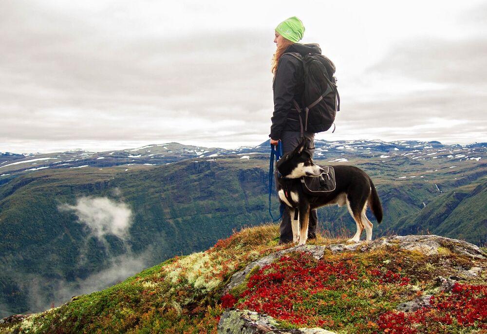 Norvegia è l'unico paese non africano nel top 5 dei paesi che si occupano della conservazione di grandi animali di terra.