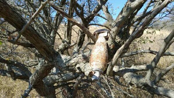 Crimea: trovata bomba inesplosa della seconda guerra mondiale su un albero - Sputnik Italia