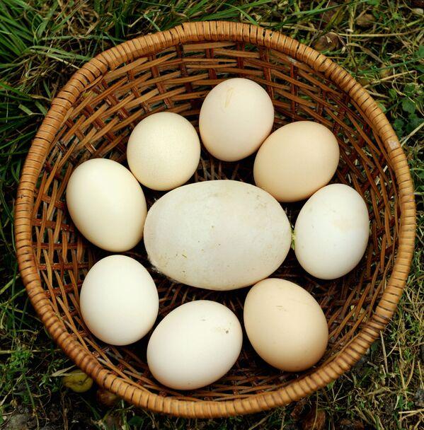 Un uovo gigante di 170 grammi dalla Georgia, finito nel Guinness dei primati. - Sputnik Italia