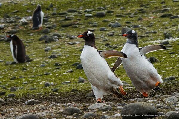 Pinguini e pattinaggio artistico. La foto di Andre B Erlich. - Sputnik Italia
