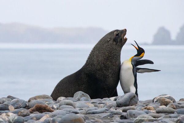 La foto Petto a petto tra un pinguino reale ed una foca monaca di Tom Mangelsen. - Sputnik Italia