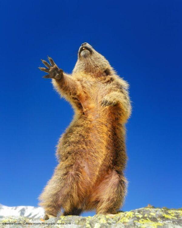 Martina Gebert scatta un orso che balla, dando allla foto il titolo Dancing, yeah. - Sputnik Italia