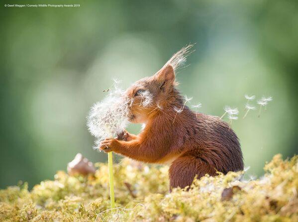I desideri di uno scoiattolo ripresi da Geert Wegger, fotografo svedese. - Sputnik Italia