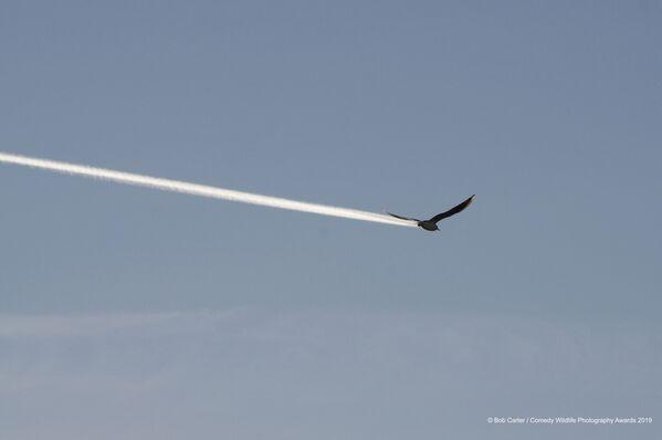 No, non è una aereo! È un uccello. - Sputnik Italia