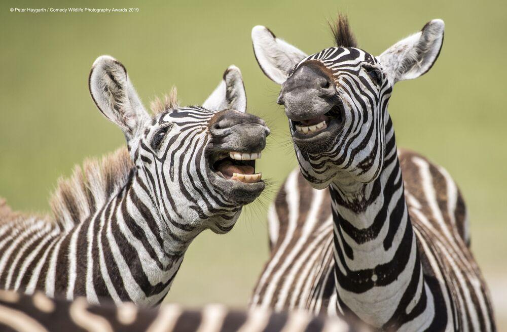 Peter Haygarth riprende due zebre che ridono.