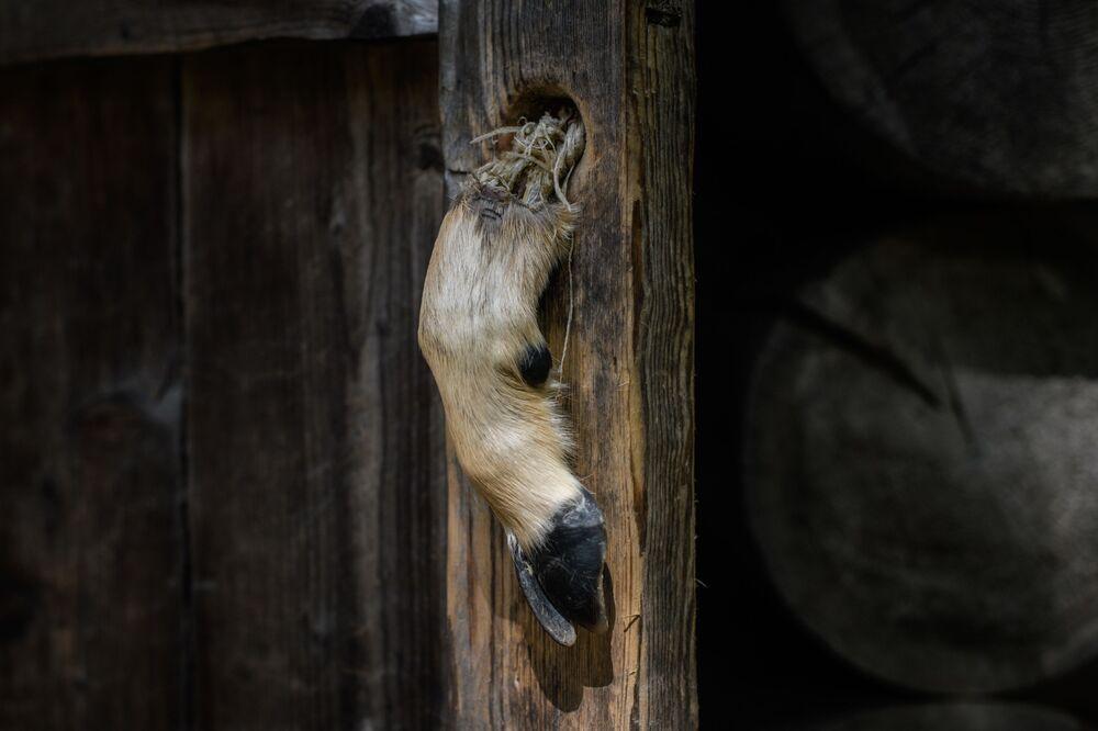 Zoccolo di capriolo usato come maniglia per una cabina nel 'Campo segreto', luogo di nascita di uno dei leader nordcoreani, Kim Jong Il.