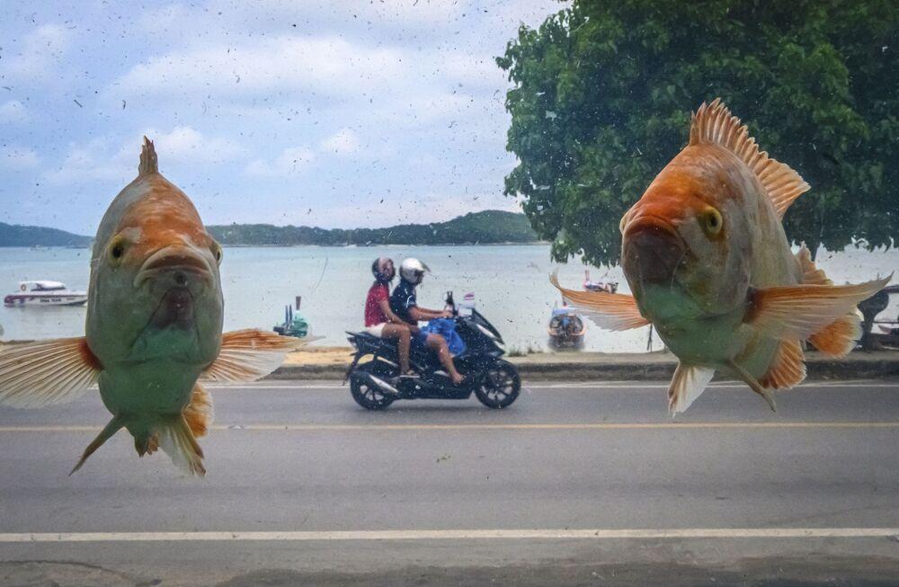 Foto della spiaggia di Rawai a Phuket attraverso il vetro di un acquario con pesci.