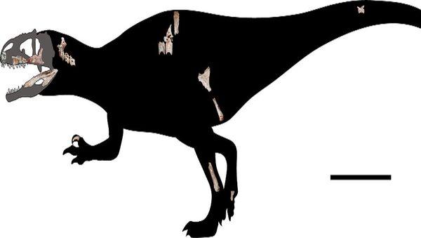 Fossili di dinosauro predatore gigante scoperti in Thailandia - Sputnik Italia