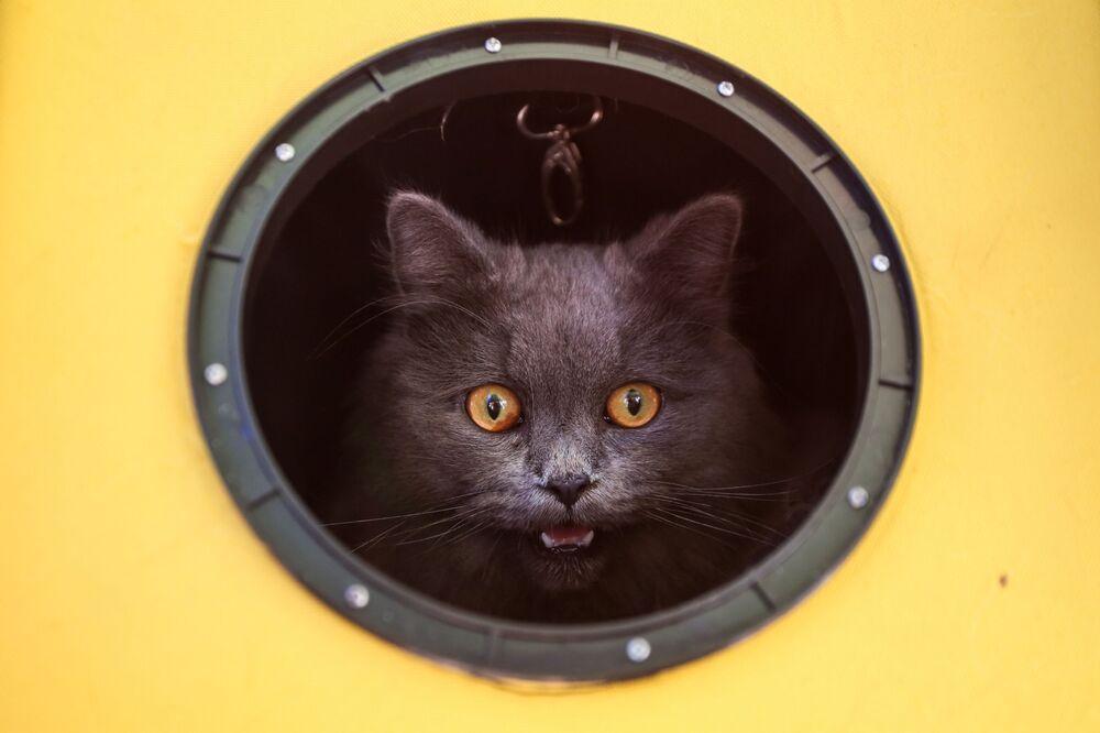 Un gatto dietro un'oblò.