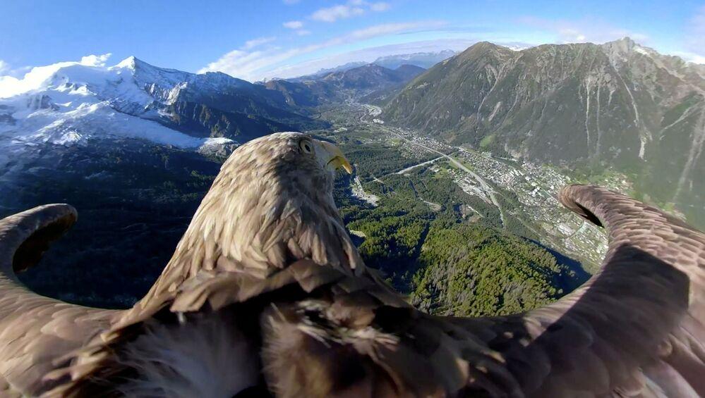 Un'aquila con una videocamera a 360° vola sopra i ghiacciai e le montagne a Chamonix, in Francia.