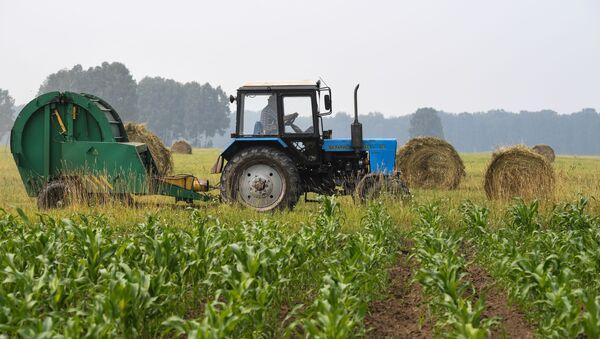 Contadino sul trattore nel campo agriсolo - Sputnik Italia