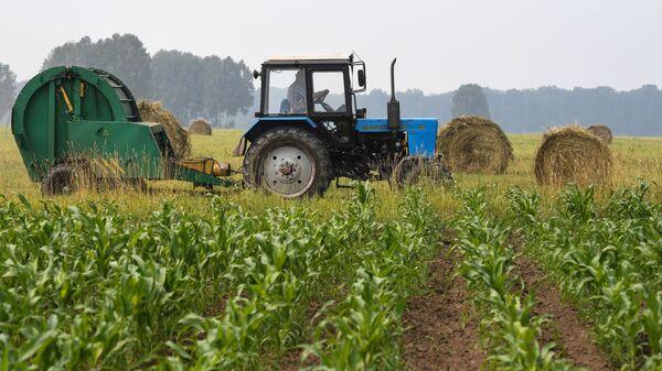 Contadino sul trattore nel campo agriolo - Sputnik Italia