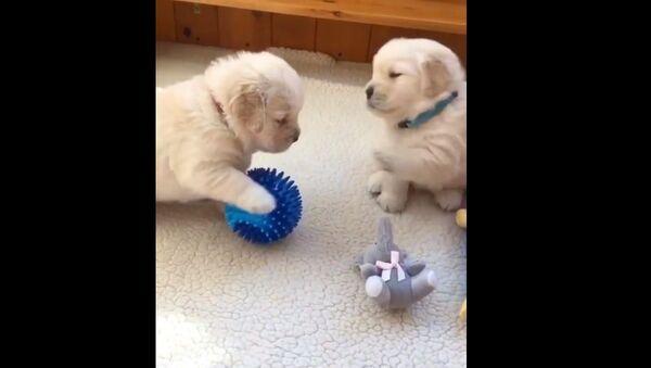 Due cuccioli  - Sputnik Italia