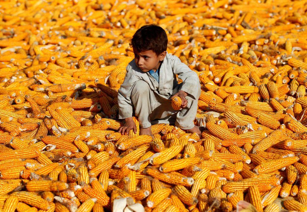 Un bambino in un campo di mais a Nangarhar, in Afghanistan.