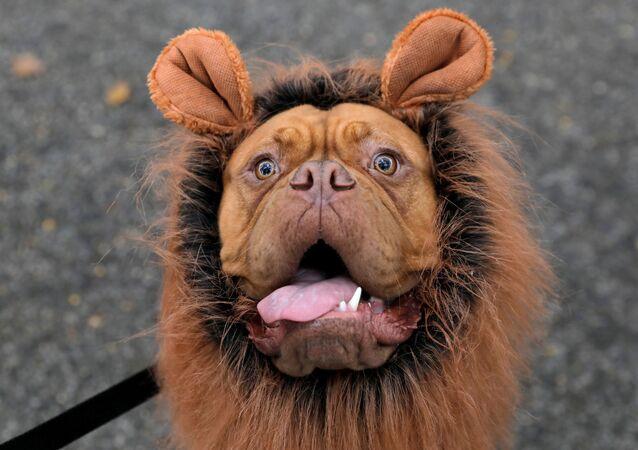 I partecipanti all'annuale Halloween Dog Parade di New York