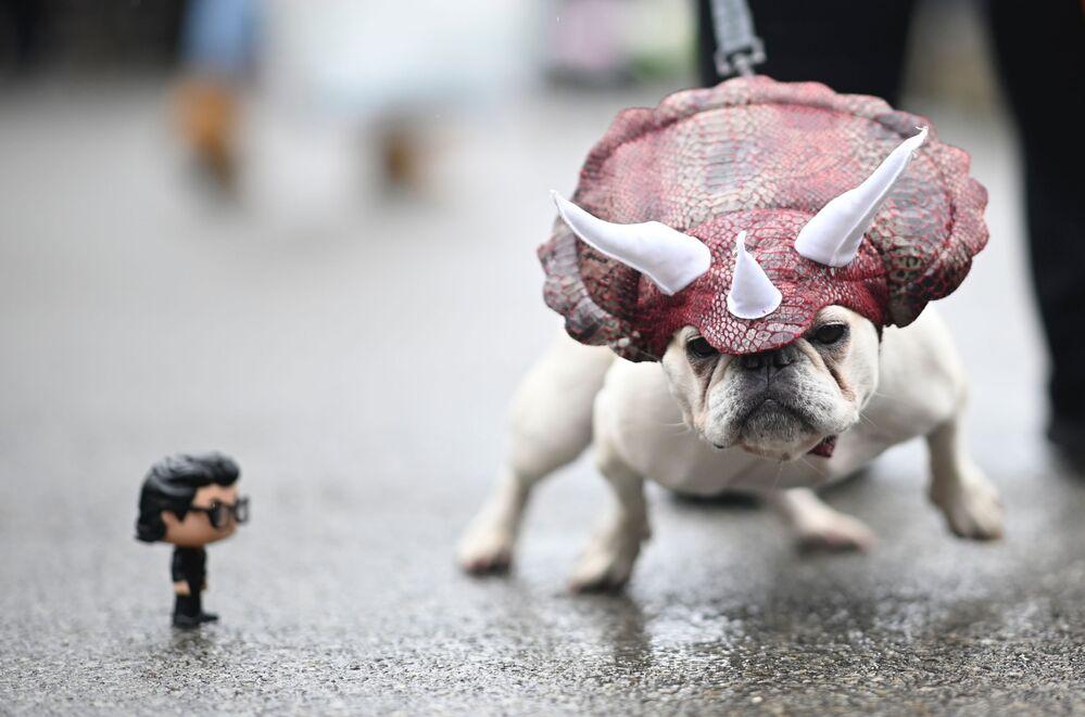 Un cane vestito da dinosauro all'annuale Halloween Dog Parade a New York