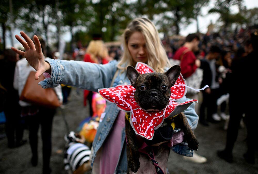 Un cane vestito da Demogorgon all'annuale Halloween Dog Parade a New York
