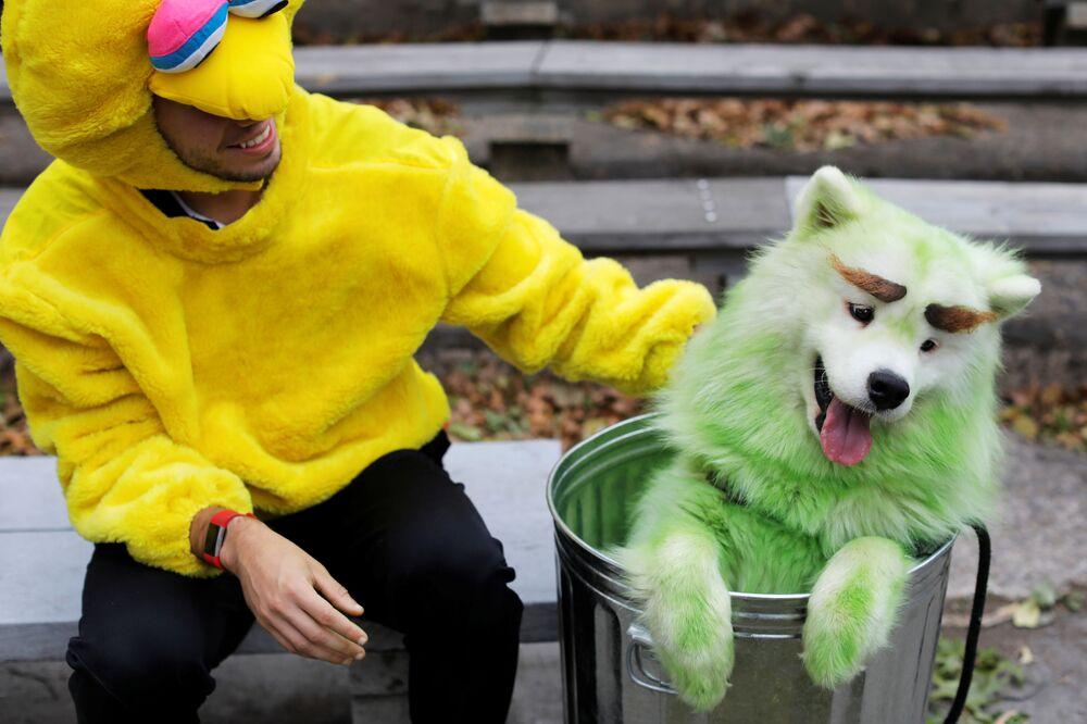 Mark Belio, vestito come il Big Bird del programma televisivo statunitense per bambini 'Sesame Street', con Biff the Samoyed, vestito da Oscar the Grouch, all'annuale Halloween Dog Parade di New York