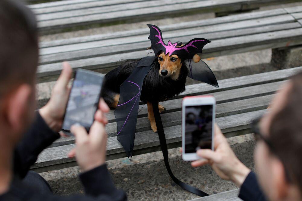 La gente scatta fotogragie del cane Dita the Doxle, vestito da pipistrello, all'annuale Halloween Dog Parade a New York