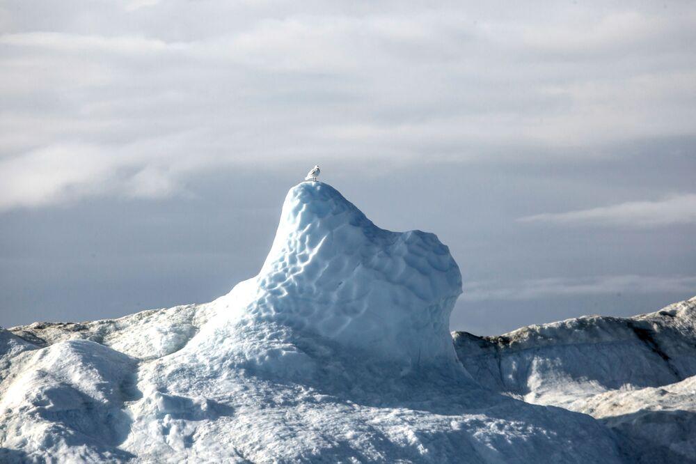 Uccello sul picco dell'iceberg vicino all'isola della Groenlandia