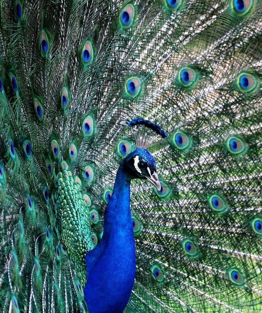 La foto 'Blue2019' presentata dalla fotografa tedesca Lindita Fanaj al concorso delle migliori foto del mondo #Blue2019