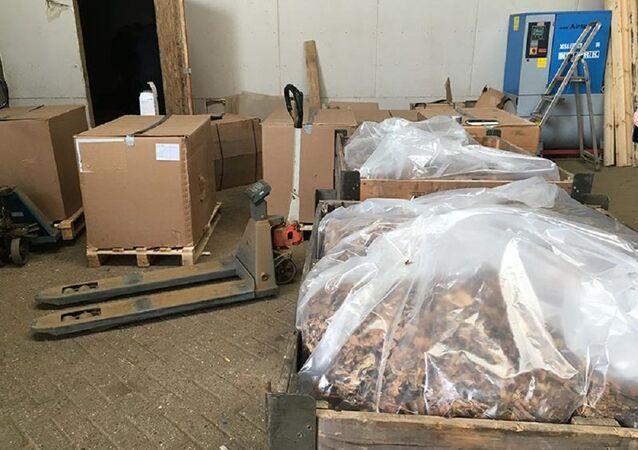 Produzione di tabacco illecita