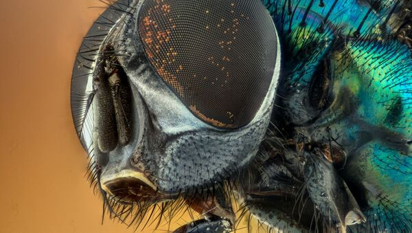 Una mosca - Sputnik Italia