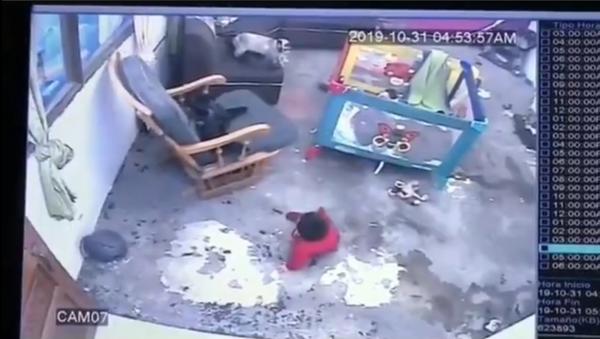 Colombia: bambino quasi cade dalle scale, il gatto lo salva - Sputnik Italia