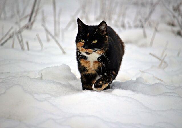 Un gatto contro la neve