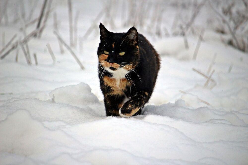 Un gatto cammina nella neve