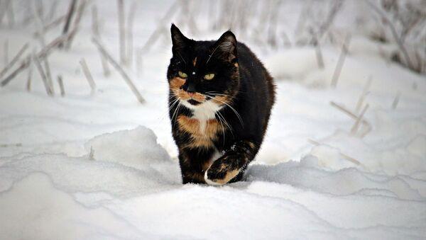 Un gatto contro la neve - Sputnik Italia