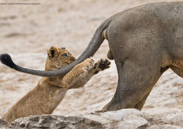 La foto Grab life by the .... della fotografa britannica Sarah Skinner, vincitrice del Comedy Wildlife Photography Awards 2019