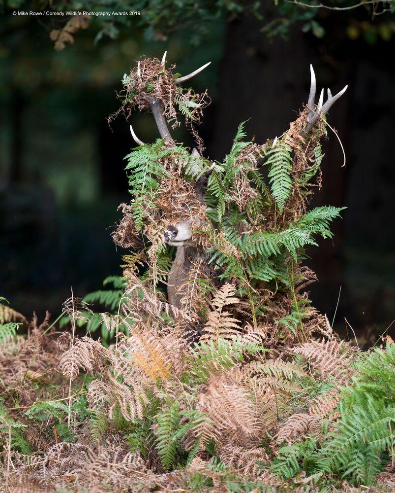 La foto Deer - What Deer? del fotografo britannico Mike Rowe, Comedy Wildlife Photography Awards 2019